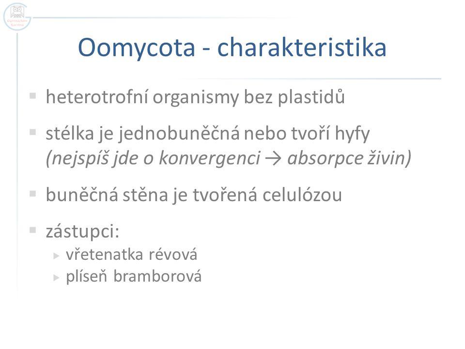 Oomycota - charakteristika  heterotrofní organismy bez plastidů  stélka je jednobuněčná nebo tvoří hyfy (nejspíš jde o konvergenci → absorpce živin)  buněčná stěna je tvořená celulózou  zástupci:  vřetenatka révová  plíseň bramborová