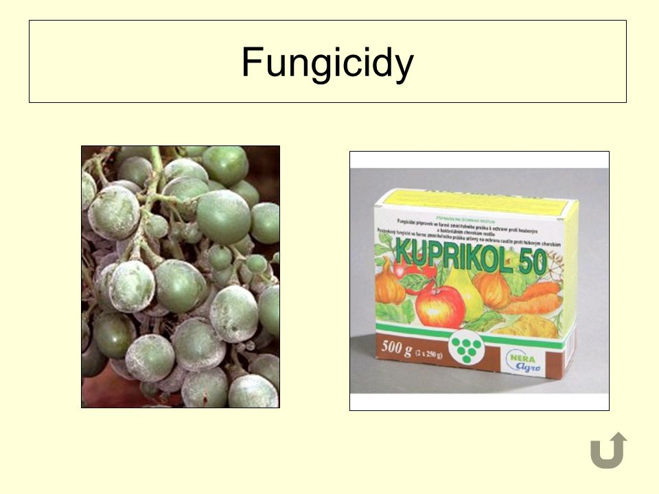 Fungicidy
