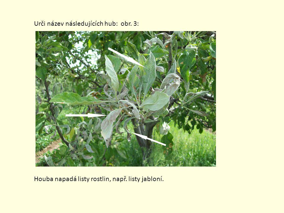 Urči název následujících hub: obr. 3: Houba napadá listy rostlin, např. listy jabloní.