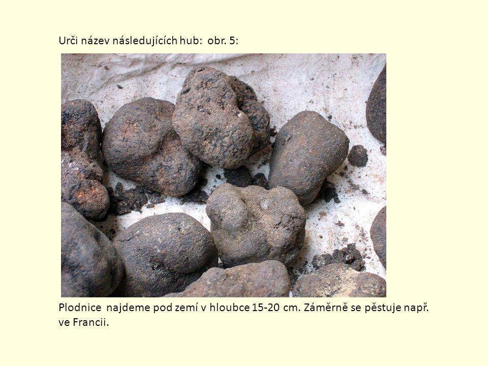 Urči název následujících hub: obr. 5: Plodnice najdeme pod zemí v hloubce 15-20 cm. Záměrně se pěstuje např. ve Francii.