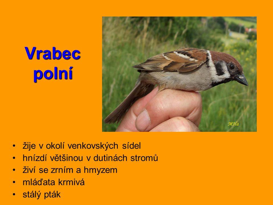 Vrabec polní žije v okolí venkovských sídel hnízdí většinou v dutinách stromů živí se zrním a hmyzem mláďata krmivá stálý pták