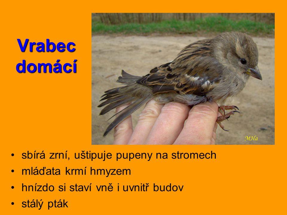 Vrabec domácí sbírá zrní, uštipuje pupeny na stromech mláďata krmí hmyzem hnízdo si staví vně i uvnitř budov stálý pták