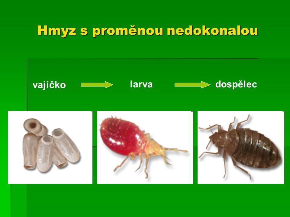 Zdroj  http://biolozka.blog.cz/1103/podkmen-vzdusnicovci-trida-hmyz-podtrida-kridlati-rad-plostice http://biolozka.blog.cz/1103/podkmen-vzdusnicovci-trida-hmyz-podtrida-kridlati-rad-plostice  http://www.nanoit.cz/stenice/ http://www.nanoit.cz/stenice/  http://galerie.kolas.cz/plostice/plost_01.htm http://galerie.kolas.cz/plostice/plost_01.htm  http://www.biolib.cz/cz/taxonimage/id898/?taxonid=72106 http://www.biolib.cz/cz/taxonimage/id898/?taxonid=72106  http://www.nature.unas.cz/faunaCR/knezicezel.htm http://www.nature.unas.cz/faunaCR/knezicezel.htm  http://www.desinsekta.cz/atlas-skudcu/73-stenice-domaci http://www.desinsekta.cz/atlas-skudcu/73-stenice-domaci  http://www.nanoit.cz/stenice/fotky-stenice.html http://www.nanoit.cz/stenice/fotky-stenice.html  http://www.google.cz/imgres?imgurl=http://lh6.ggpht.com/_fbWFXShbgnw/TC0IZXFPosI/AAAAAAAACis/qdoX YZN_nmU/Bruslařka_obecna.jpg&imgrefurl=http://picasaweb.google.com/PECHMPD/Hmyz&usg=__zAK_YY1 hGp4n0Pls0bjVw_MEb50=&h=768&w=1024&sz=153&hl=cs&start=15&zoom=1&tbnid=pEN  http://cs.wikipedia.org/wiki/Plo%C5%A1tice http://cs.wikipedia.org/wiki/Plo%C5%A1tice  http://vtm.zive.cz/clanek/znamena-hromada-plostic-na-kamenech-u-nas-pred-domem-skupinovy-sex http://vtm.zive.cz/clanek/znamena-hromada-plostic-na-kamenech-u-nas-pred-domem-skupinovy-sex  http://www.bio-life.cz/clanky/specializovana-strava/hmyz-prorazil-na-jidelnicek.html