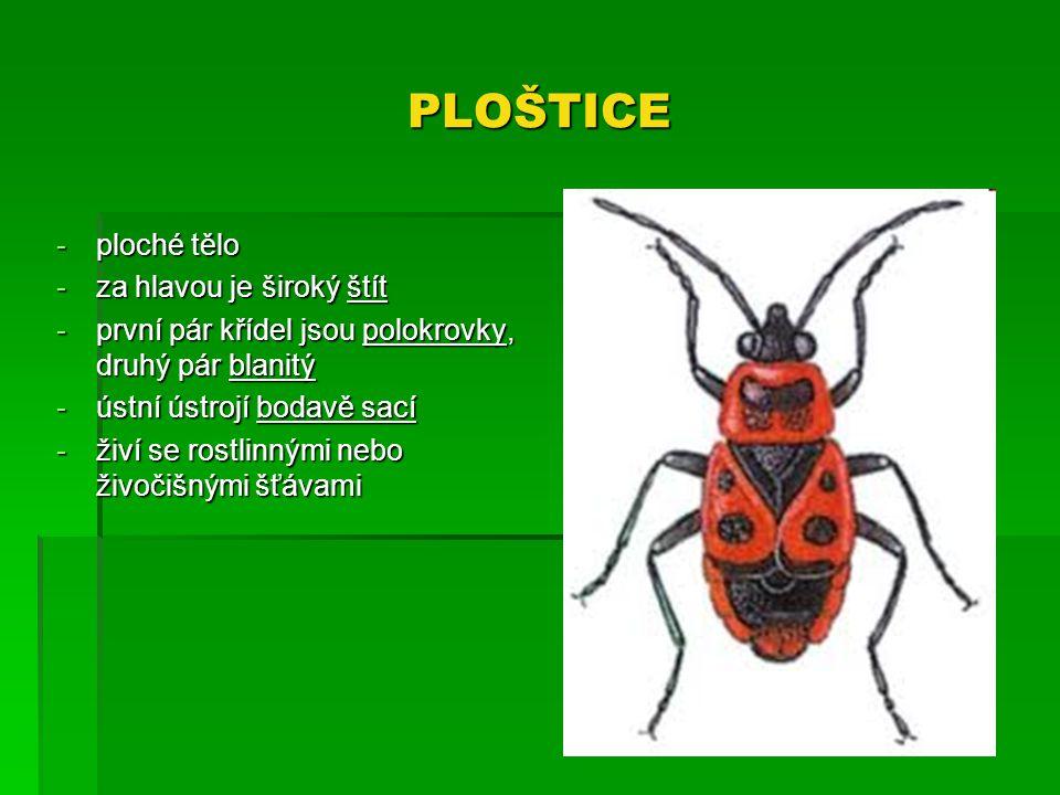 PLOŠTICE -ploché tělo -za hlavou je široký štít -první pár křídel jsou polokrovky, druhý pár blanitý -ústní ústrojí bodavě sací -živí se rostlinnými n