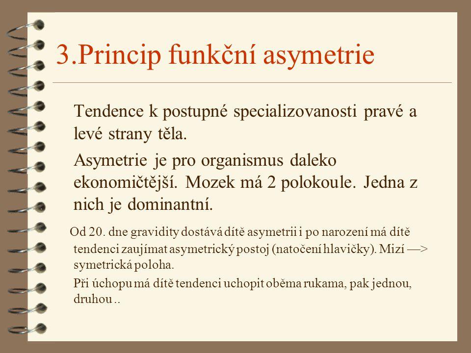 3.Princip funkční asymetrie Tendence k postupné specializovanosti pravé a levé strany těla.