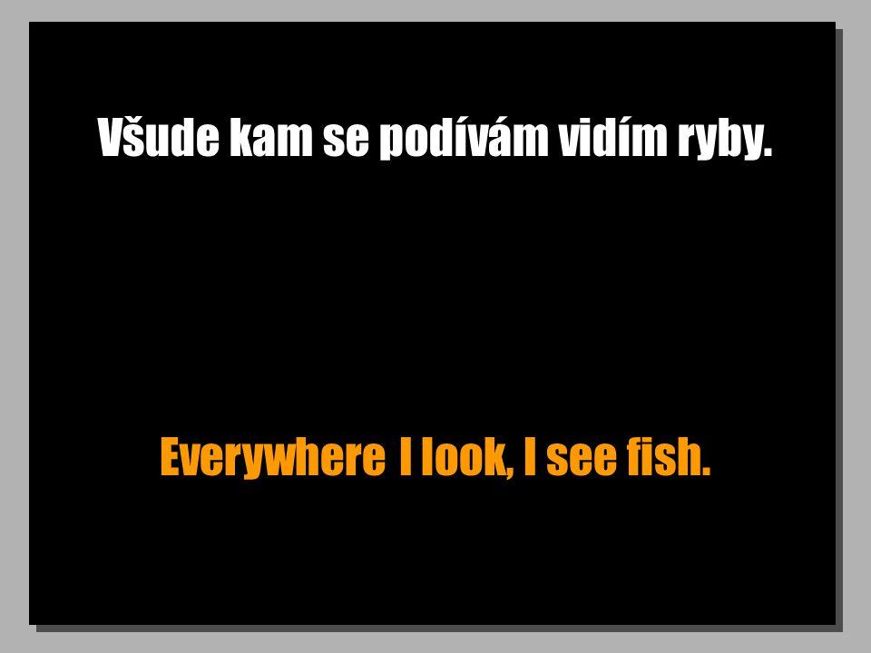 Všude kam se podívám vidím ryby. Everywhere I look, I see fish.