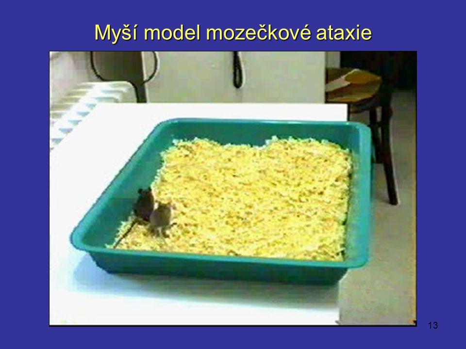 13 Myší model mozečkové ataxie