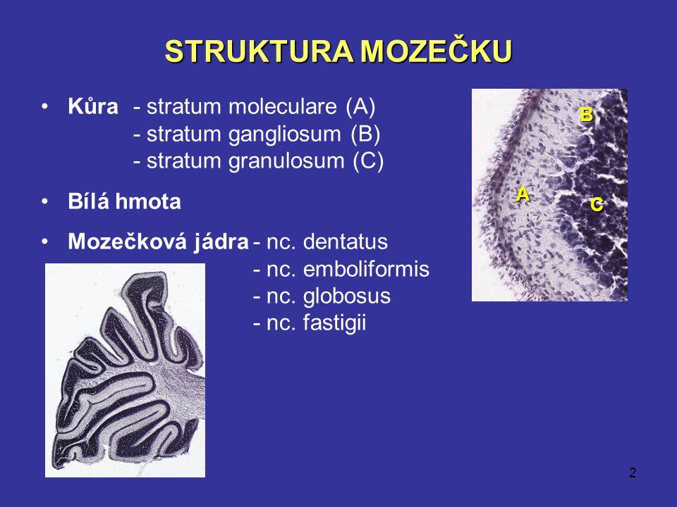 2 STRUKTURA MOZEČKU Kůra- stratum moleculare (A) - stratum gangliosum (B) - stratum granulosum (C) Bílá hmota Mozečková jádra- nc. dentatus - nc. embo