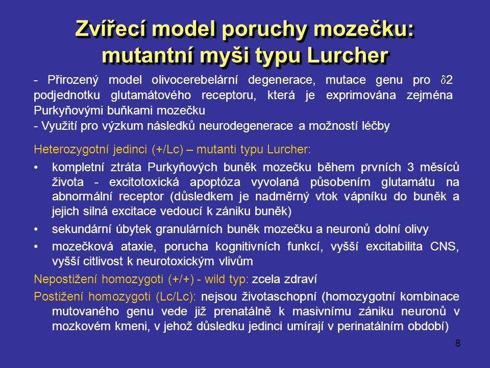 8 Zvířecí model poruchy mozečku: mutantní myši typu Lurcher Heterozygotní jedinci (+/Lc) – mutanti typu Lurcher: kompletní ztráta Purkyňových buněk mo