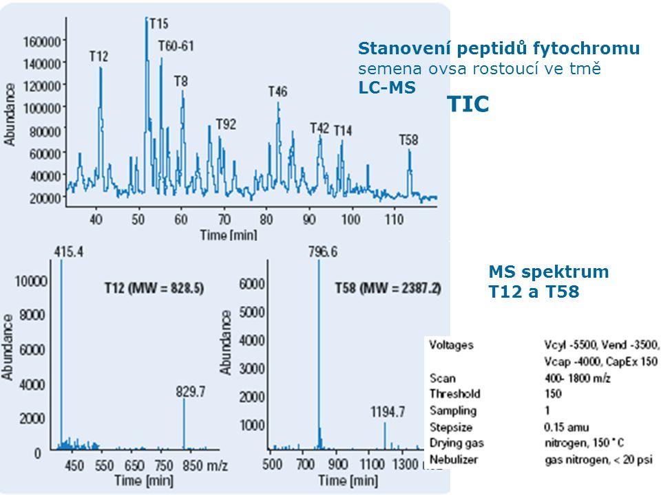 HPLC aplikace 33 Stanovení peptidů fytochromu semena ovsa rostoucí ve tmě LC-MS TIC MS spektrum T12 a T58
