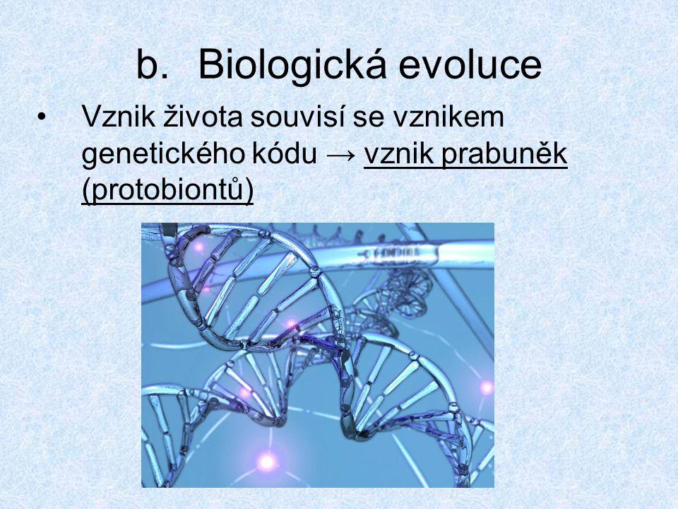 b.Biologická evoluce Vznik života souvisí se vznikem genetického kódu → vznik prabuněk (protobiontů)
