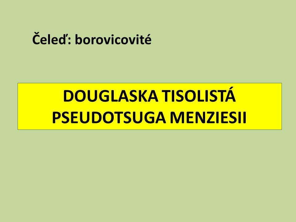 DOUGLASKA TISOLISTÁ PSEUDOTSUGA MENZIESII Čeleď: borovicovité