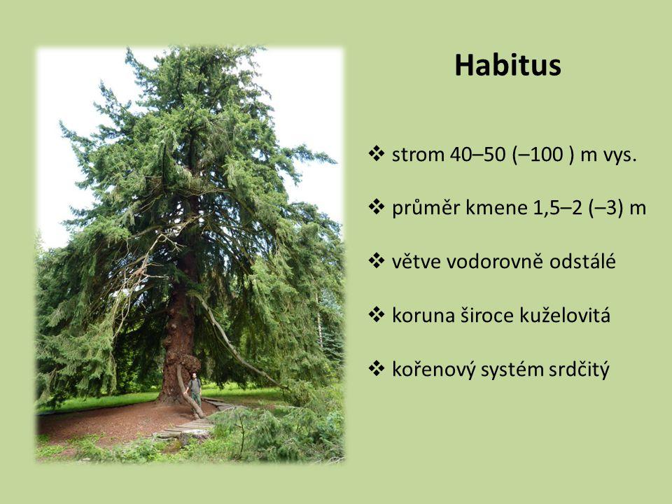 Habitus  strom 40–50 (–100 ) m vys.  průměr kmene 1,5–2 (–3) m  větve vodorovně odstálé  koruna široce kuželovitá  kořenový systém srdčitý