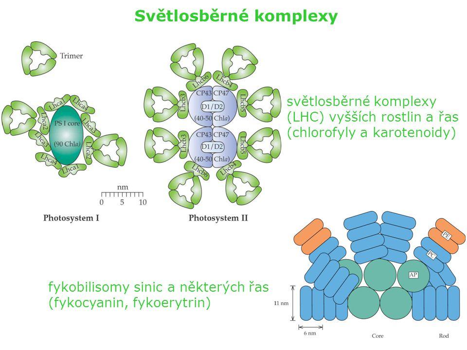 Světlosběrné komplexy fykobilisomy sinic a některých řas (fykocyanin, fykoerytrin) světlosběrné komplexy (LHC) vyšších rostlin a řas (chlorofyly a kar