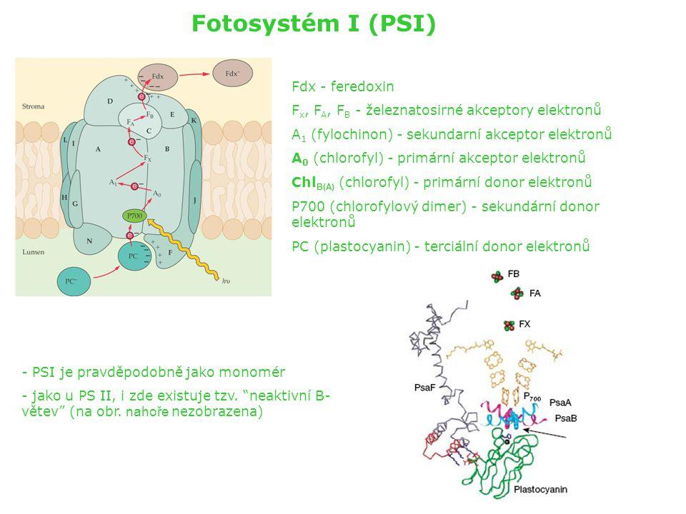 Fotosystém I (PSI) Fdx - feredoxin F x, F A, F B - železnatosirné akceptory elektronů A 1 (fylochinon) - sekundarní akceptor elektronů A 0 (chlorofyl)