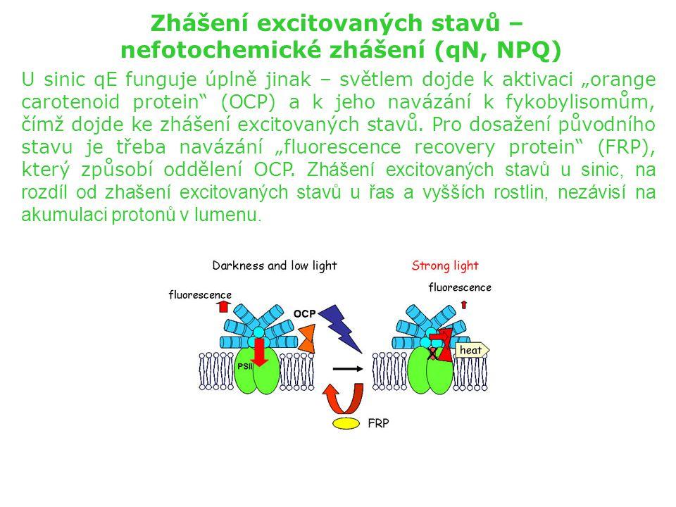 """Zhášení excitovaných stavů – nefotochemické zhášení (qN, NPQ) U sinic qE funguje úplně jinak – světlem dojde k aktivaci """"orange carotenoid protein"""" (O"""