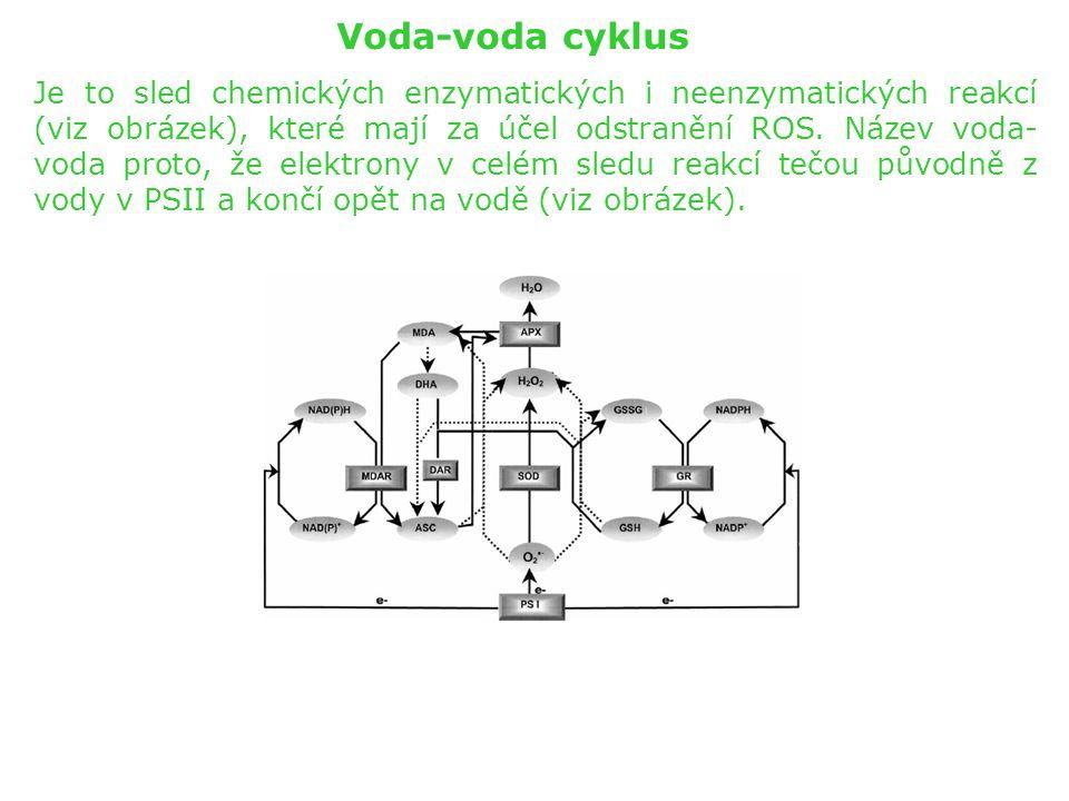 Voda-voda cyklus Je to sled chemických enzymatických i neenzymatických reakcí (viz obrázek), které mají za účel odstranění ROS. Název voda- voda proto