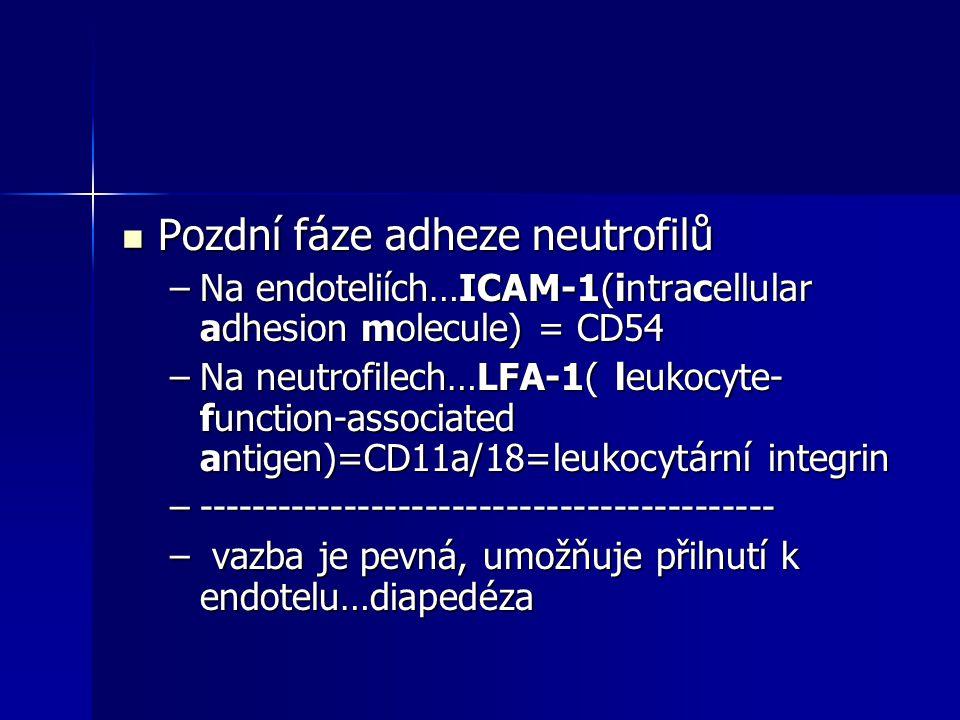 Pozdní fáze adheze neutrofilů Pozdní fáze adheze neutrofilů –Na endoteliích…ICAM-1(intracellular adhesion molecule) = CD54 –Na neutrofilech…LFA-1( leu