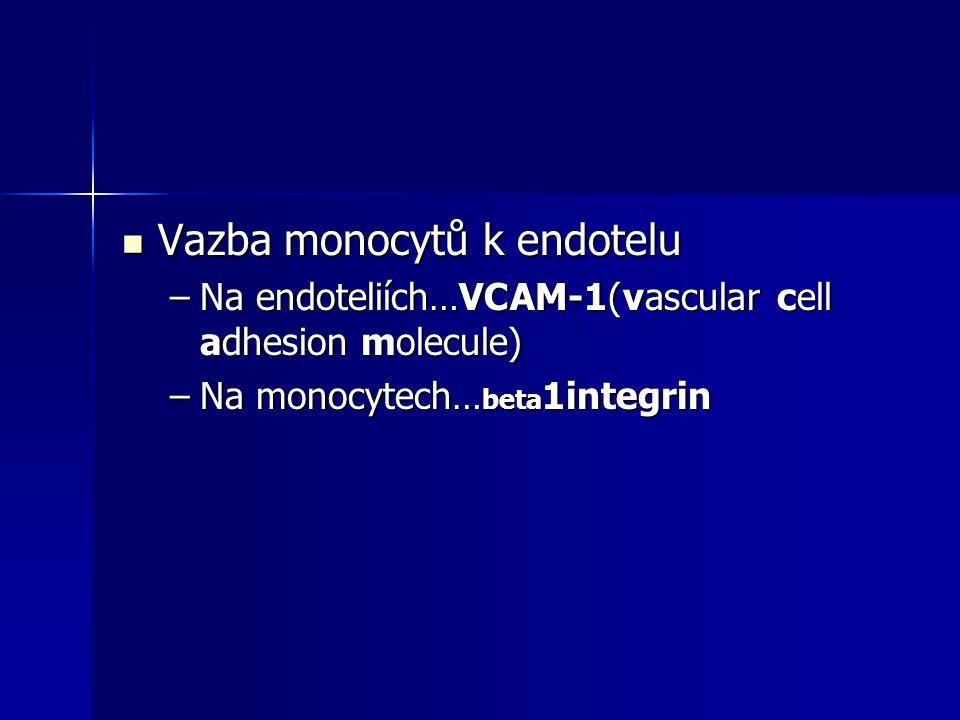 Vazba monocytů k endotelu Vazba monocytů k endotelu –Na endoteliích…VCAM-1(vascular cell adhesion molecule) –Na monocytech… beta 1integrin