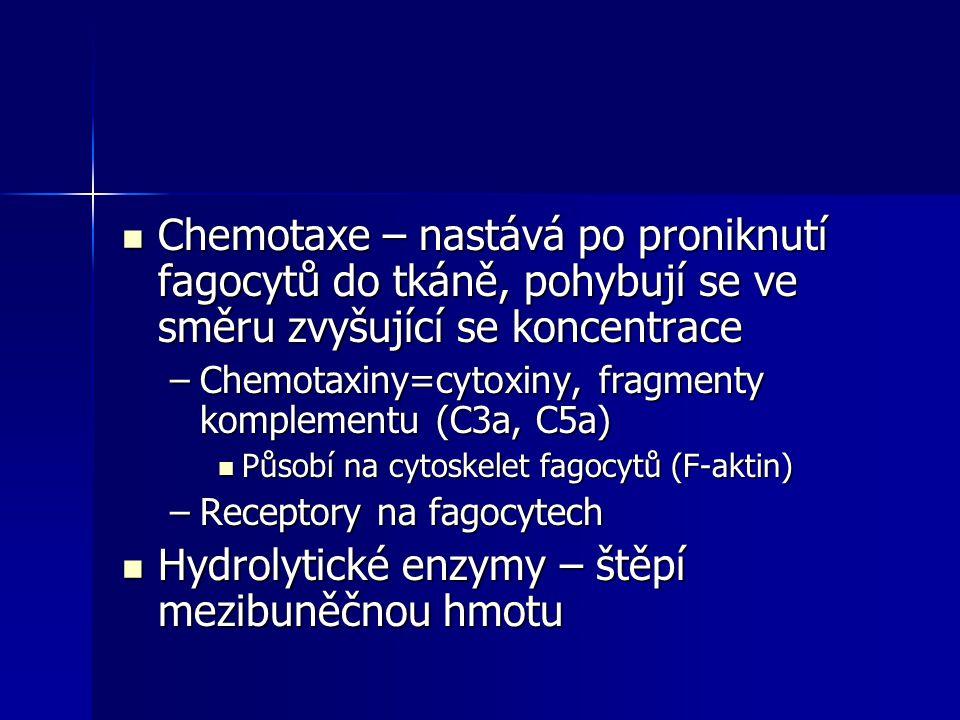 Chemotaxe – nastává po proniknutí fagocytů do tkáně, pohybují se ve směru zvyšující se koncentrace Chemotaxe – nastává po proniknutí fagocytů do tkáně