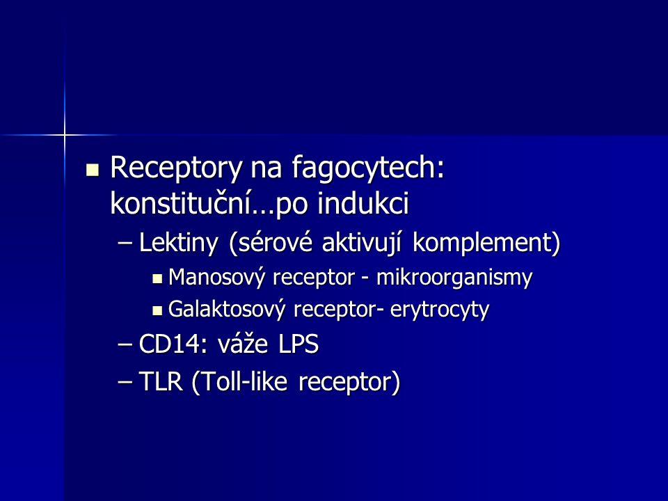 Receptory na fagocytech: konstituční…po indukci Receptory na fagocytech: konstituční…po indukci –Lektiny (sérové aktivují komplement) Manosový recepto