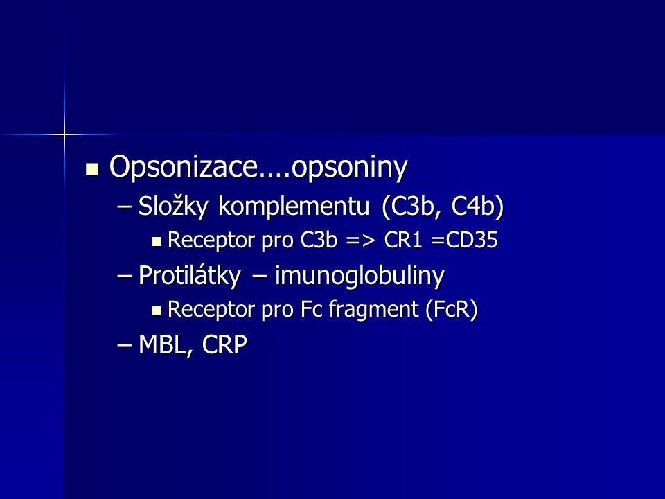 Opsonizace….opsoniny Opsonizace….opsoniny –Složky komplementu (C3b, C4b) Receptor pro C3b => CR1 =CD35 Receptor pro C3b => CR1 =CD35 –Protilátky – imu