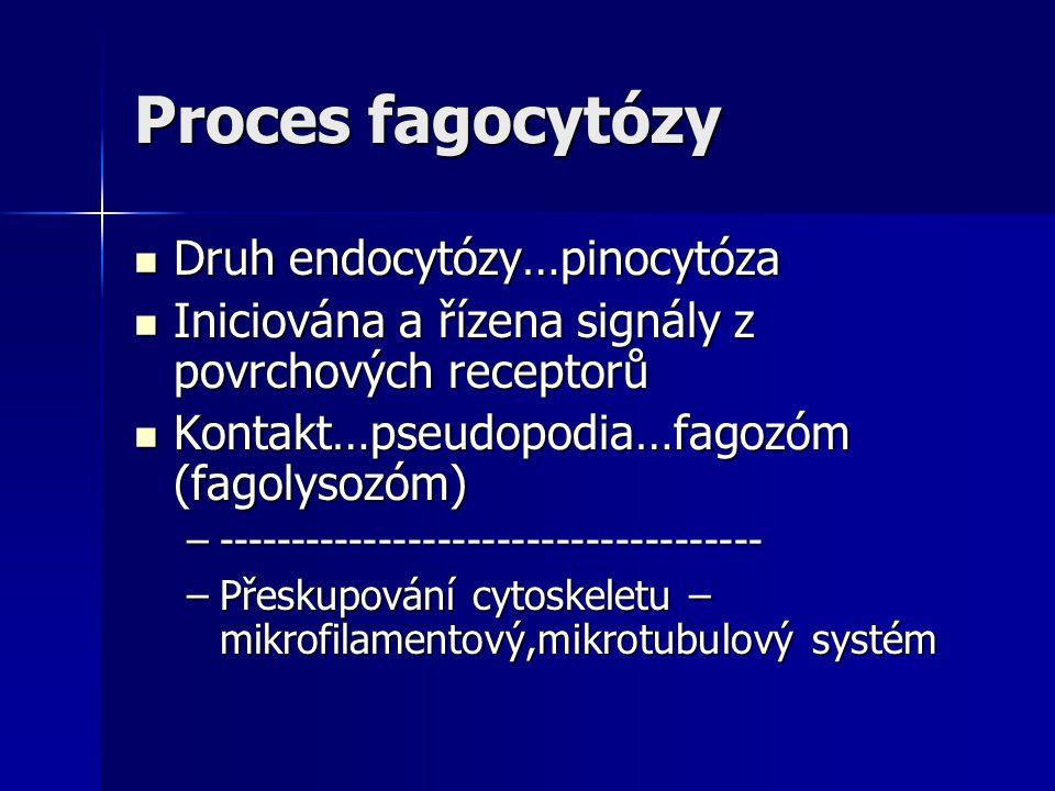 Proces fagocytózy Druh endocytózy…pinocytóza Druh endocytózy…pinocytóza Iniciována a řízena signály z povrchových receptorů Iniciována a řízena signál