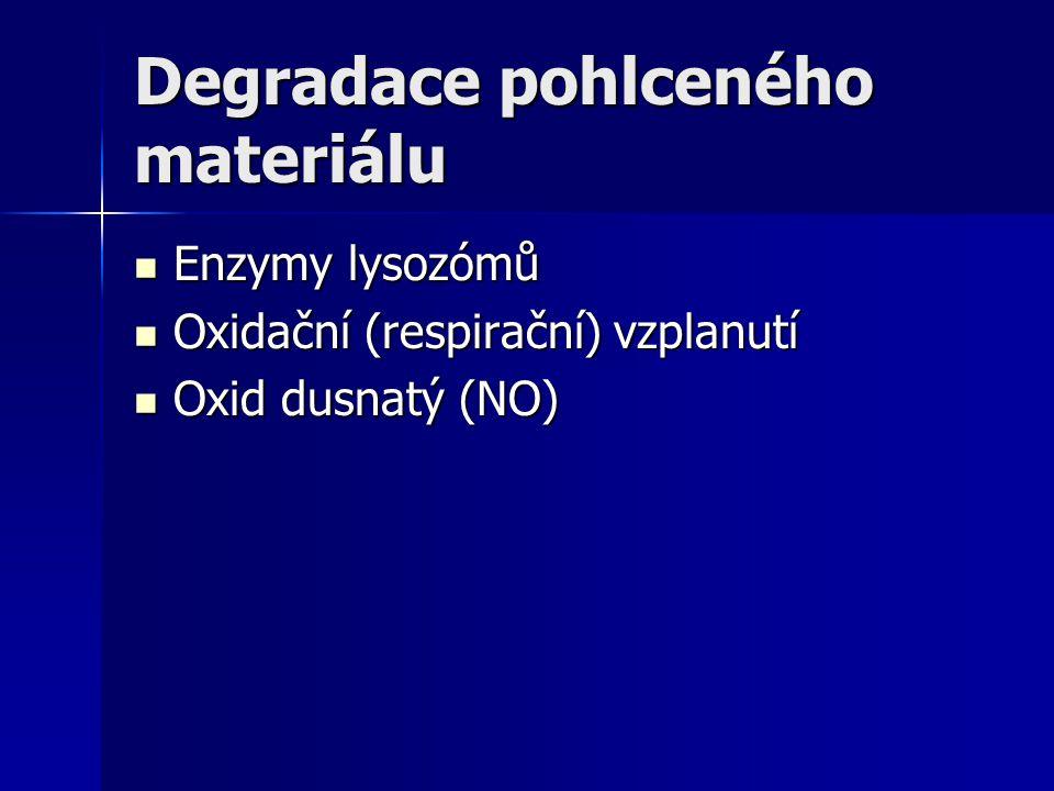 Degradace pohlceného materiálu Enzymy lysozómů Enzymy lysozómů Oxidační (respirační) vzplanutí Oxidační (respirační) vzplanutí Oxid dusnatý (NO) Oxid