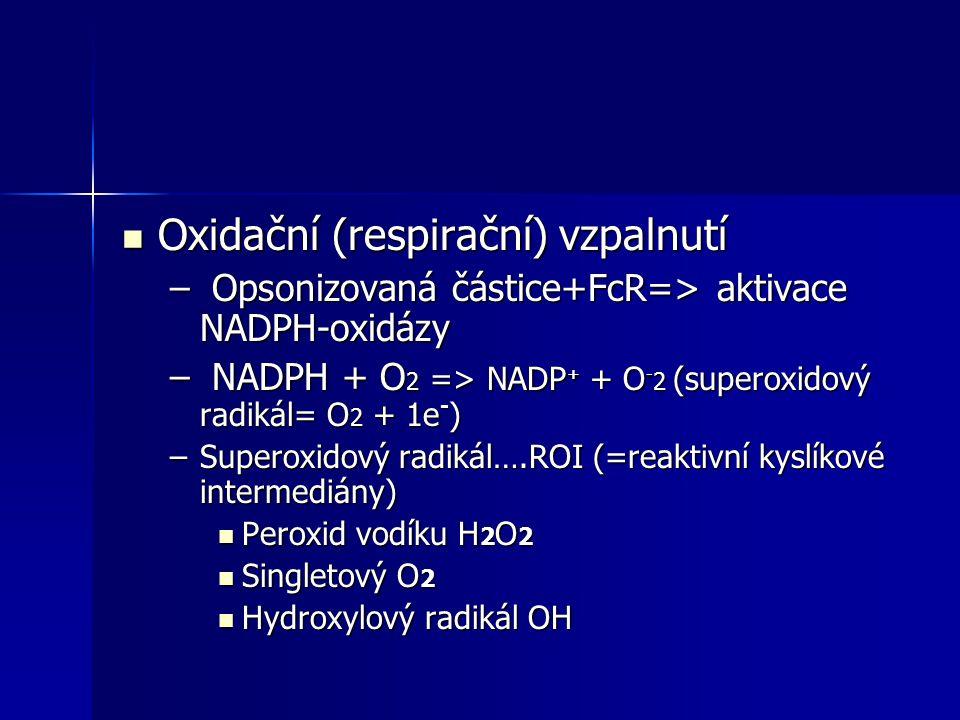 Oxidační (respirační) vzpalnutí Oxidační (respirační) vzpalnutí – Opsonizovaná částice+FcR=> aktivace NADPH-oxidázy – NADPH + O 2 => NADP + + O - 2 (s