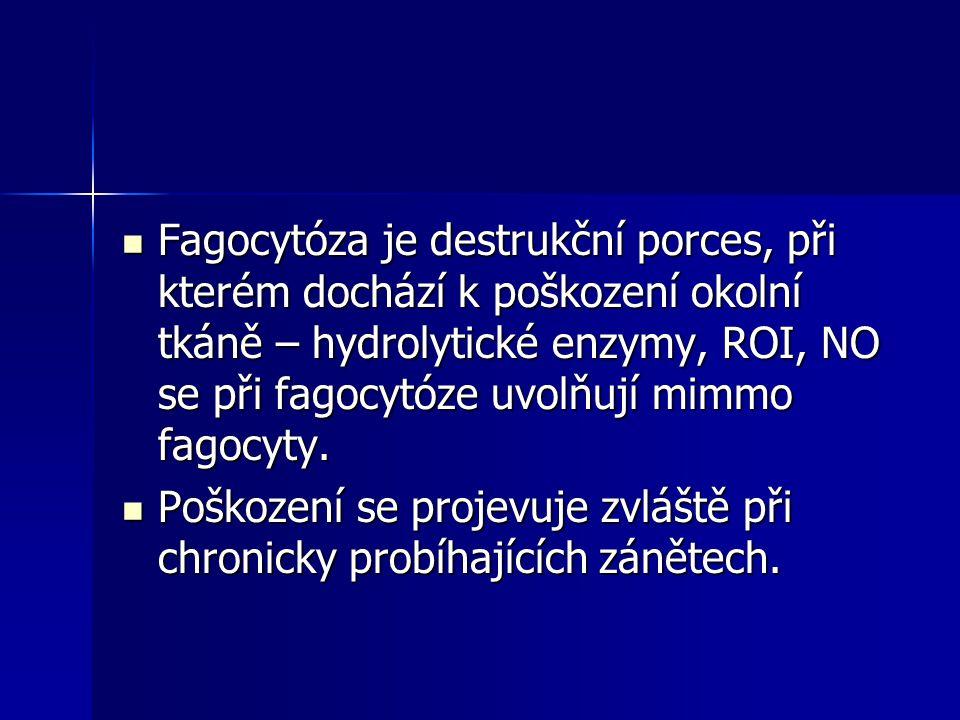 Fagocytóza je destrukční porces, při kterém dochází k poškození okolní tkáně – hydrolytické enzymy, ROI, NO se při fagocytóze uvolňují mimmo fagocyty.