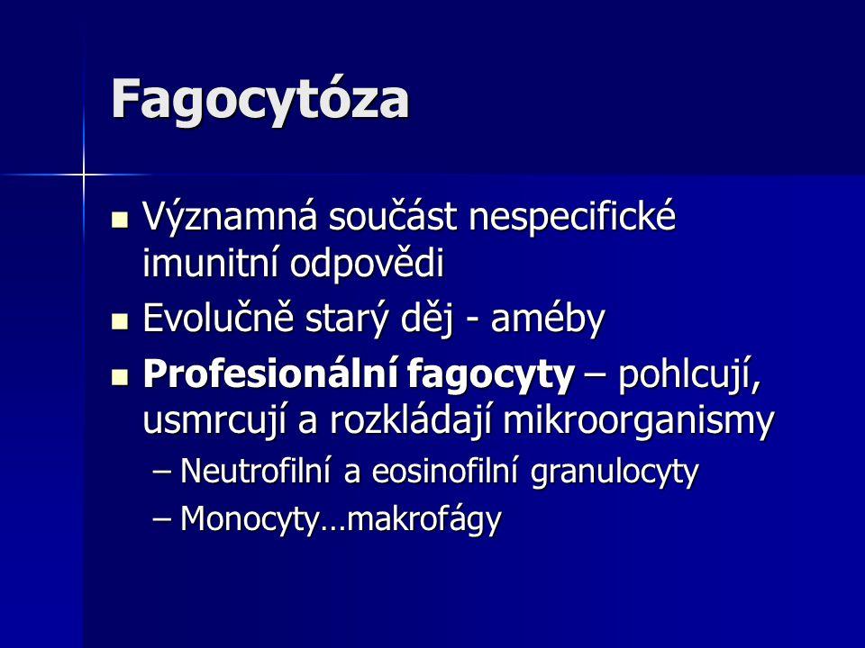 Fagocytóza Významná součást nespecifické imunitní odpovědi Významná součást nespecifické imunitní odpovědi Evolučně starý děj - améby Evolučně starý d