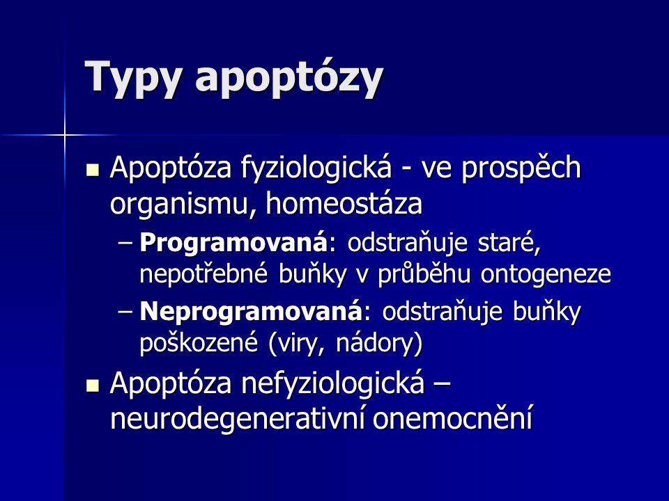 Typy apoptózy Apoptóza fyziologická - ve prospěch organismu, homeostáza Apoptóza fyziologická - ve prospěch organismu, homeostáza –Programovaná: odstr