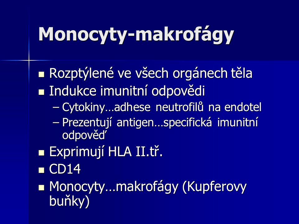 Monocyty-makrofágy Rozptýlené ve všech orgánech těla Rozptýlené ve všech orgánech těla Indukce imunitní odpovědi Indukce imunitní odpovědi –Cytokiny…a