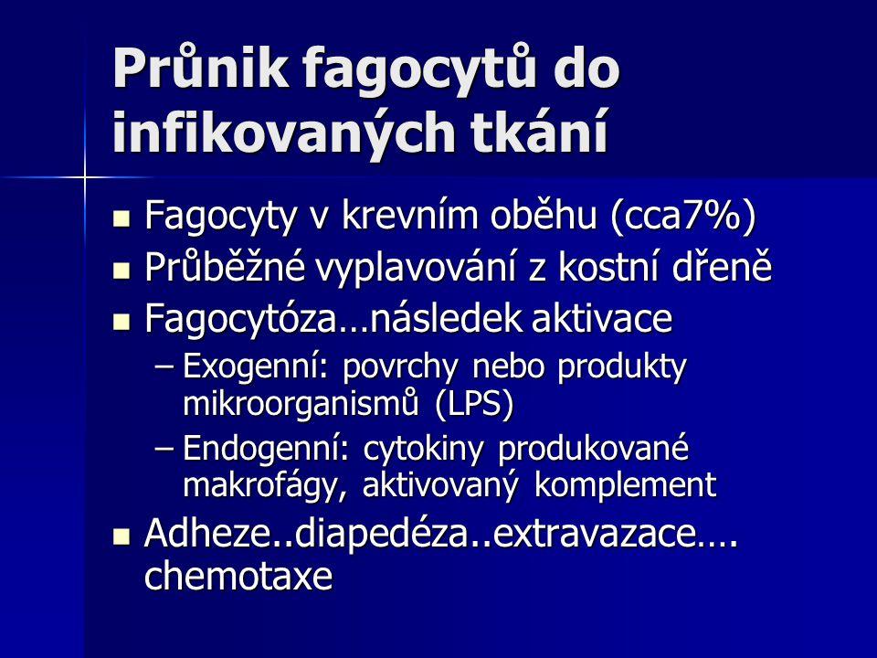 Průnik fagocytů do infikovaných tkání Fagocyty v krevním oběhu (cca7%) Fagocyty v krevním oběhu (cca7%) Průběžné vyplavování z kostní dřeně Průběžné v