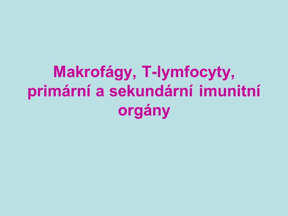 Lymfatické tkáně a orgány Jsou propojeny s ostatními orgány a tkáněmi sítí lymfatických a krevních cév Primární lymfatické tkáně a orgány * kostní dřeň, thymus * místo vzniku, zrání a diferenciace imunokompetentních buněk * nezralé lymfocyty zde získávají svou antigenní specifitu