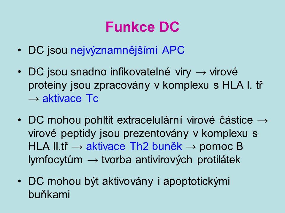 Funkce DC DC jsou nejvýznamnějšími APC DC jsou snadno infikovatelné viry → virové proteiny jsou zpracovány v komplexu s HLA I. tř → aktivace Tc DC moh