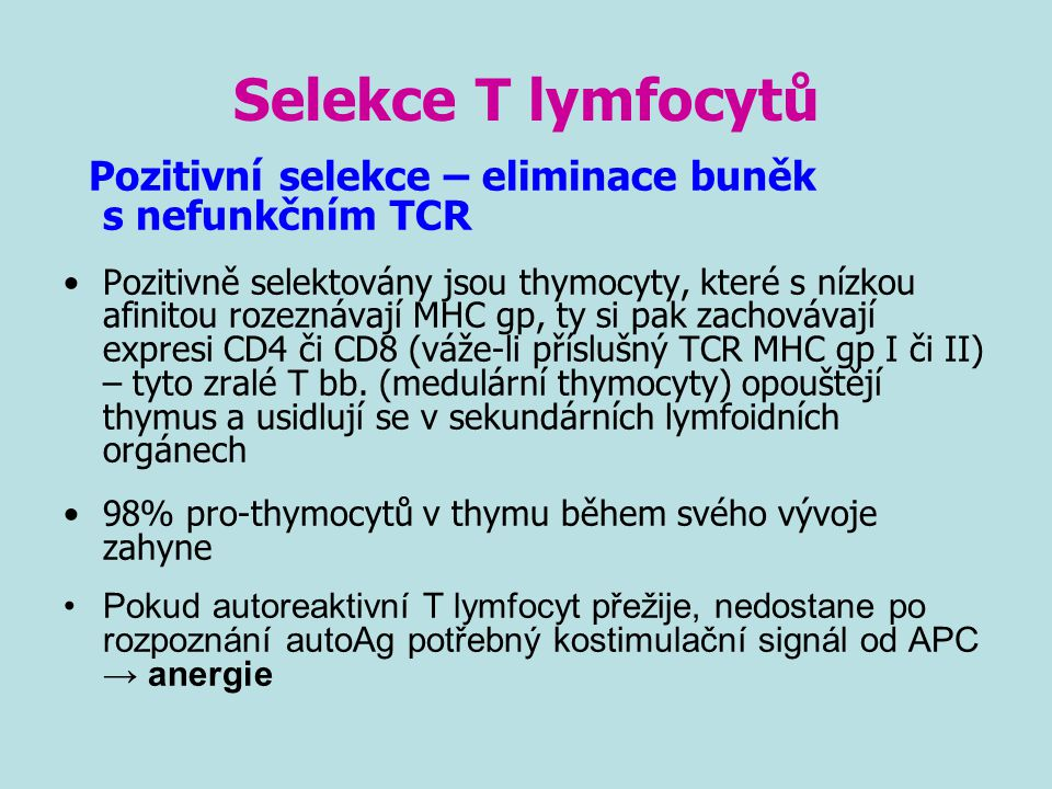 Selekce T lymfocytů Pozitivní selekce – eliminace buněk s nefunkčním TCR Pozitivně selektovány jsou thymocyty, které s nízkou afinitou rozeznávají MHC