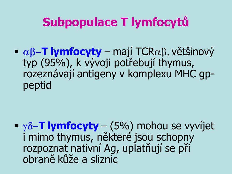 Subpopulace T lymfocytů   T lymfocyty – mají TCR  většinový typ (95%), k vývoji potřebují thymus, rozeznávají antigeny v komplexu MHC gp- pept