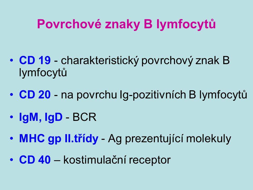 Povrchové znaky B lymfocytů CD 19 - charakteristický povrchový znak B lymfocytů CD 20 - na povrchu Ig-pozitivních B lymfocytů IgM, IgD - BCR MHC gp II