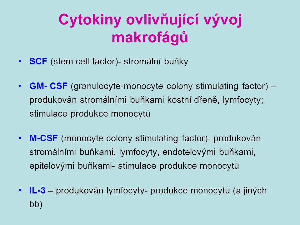 Cytokiny ovlivňující vývoj makrofágů SCF (stem cell factor)- stromální buňky GM- CSF (granulocyte-monocyte colony stimulating factor) – produkován str