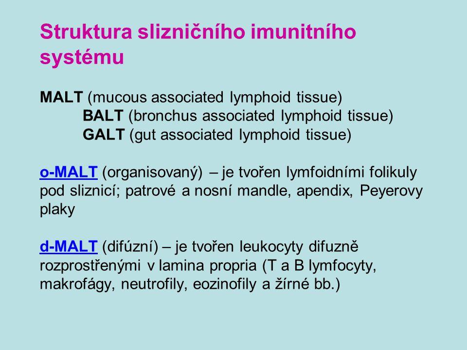 Struktura slizničního imunitního systému MALT (mucous associated lymphoid tissue) BALT (bronchus associated lymphoid tissue) GALT (gut associated lymp