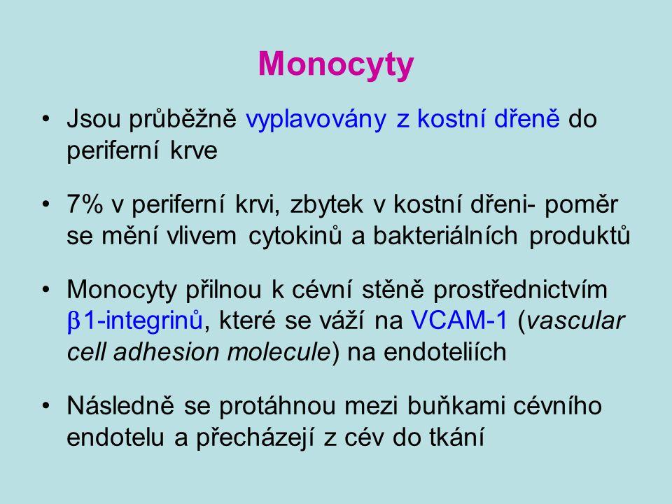 Monocyty Do místa zánětu jsou směrovány chemokiny V tkáni se aktivně pohybují k místu zánětu tak, že produkují enzymy, které štěpí mezibuněčnou hmotu, posunují se pomocí reverzibilních adhezivních interakcí svých povrchových molekul s molekulami mezibuněčné hmoty Přeměna ve tkáňové makrofágy