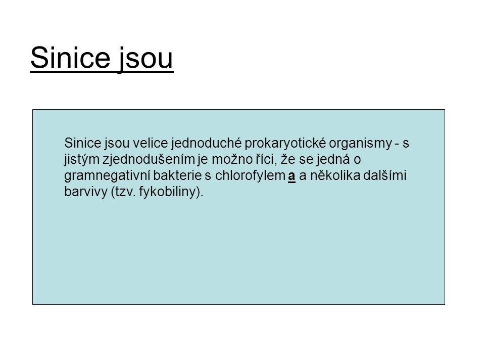 Sinice jsou Sinice jsou velice jednoduché prokaryotické organismy - s jistým zjednodušením je možno říci, že se jedná o gramnegativní bakterie s chlor