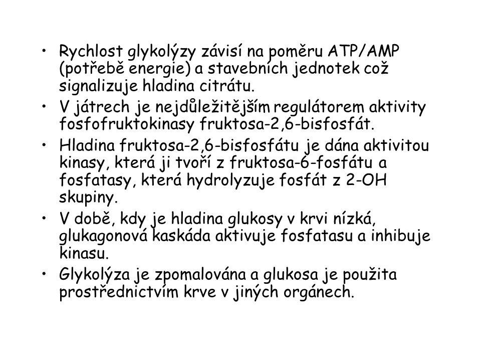 Rychlost glykolýzy závisí na poměru ATP/AMP (potřebě energie) a stavebních jednotek což signalizuje hladina citrátu. V játrech je nejdůležitějším regu