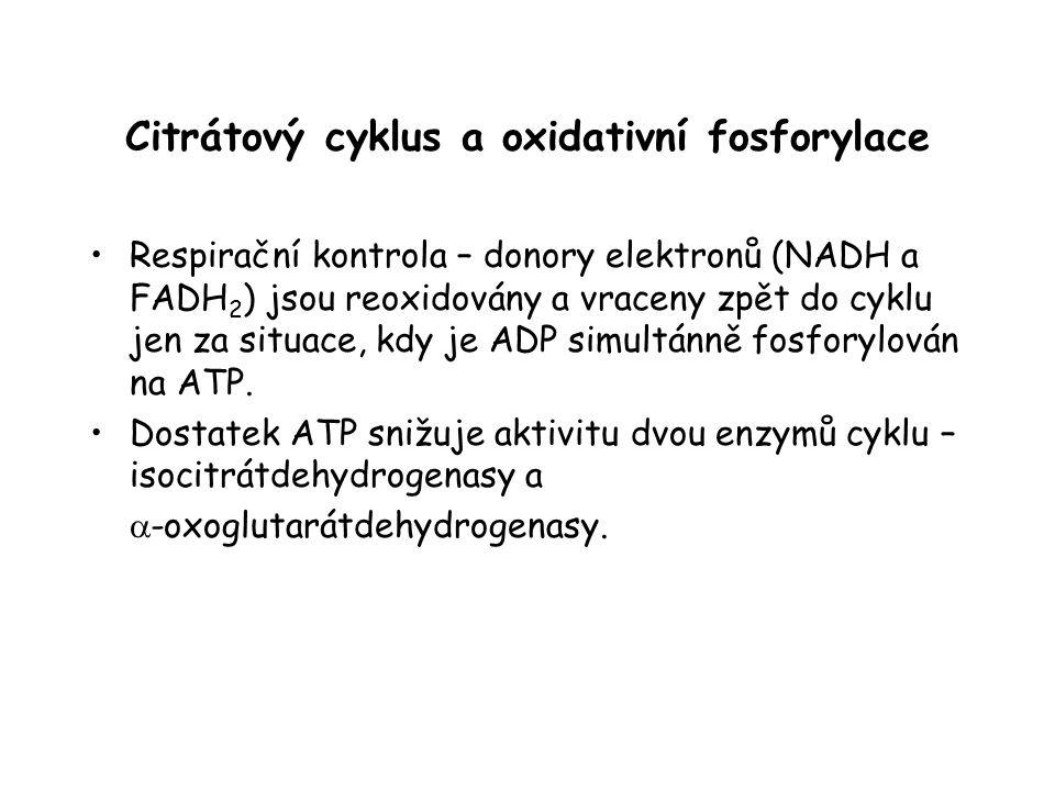 Citrátový cyklus a oxidativní fosforylace Respirační kontrola – donory elektronů (NADH a FADH 2 ) jsou reoxidovány a vraceny zpět do cyklu jen za situ