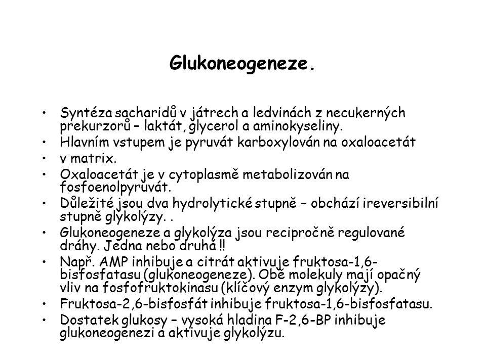 Glukoneogeneze. Syntéza sacharidů v játrech a ledvinách z necukerných prekurzorů – laktát, glycerol a aminokyseliny. Hlavním vstupem je pyruvát karbox