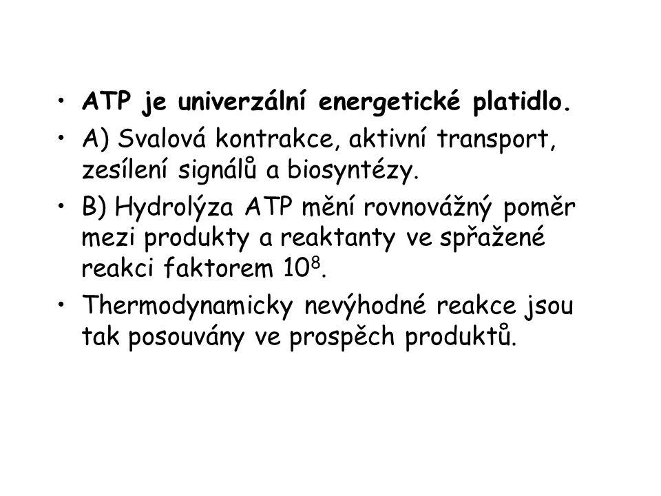 ATP je univerzální energetické platidlo. A) Svalová kontrakce, aktivní transport, zesílení signálů a biosyntézy. B) Hydrolýza ATP mění rovnovážný pomě