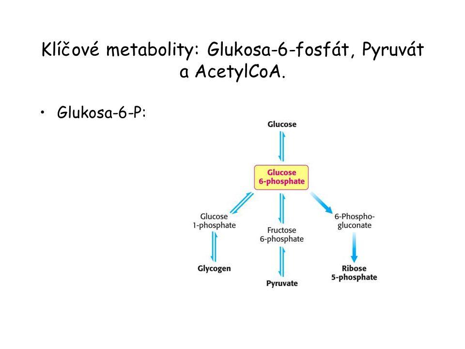 Klíčové metabolity: Glukosa-6-fosfát, Pyruvát a AcetylCoA. Glukosa-6-P: