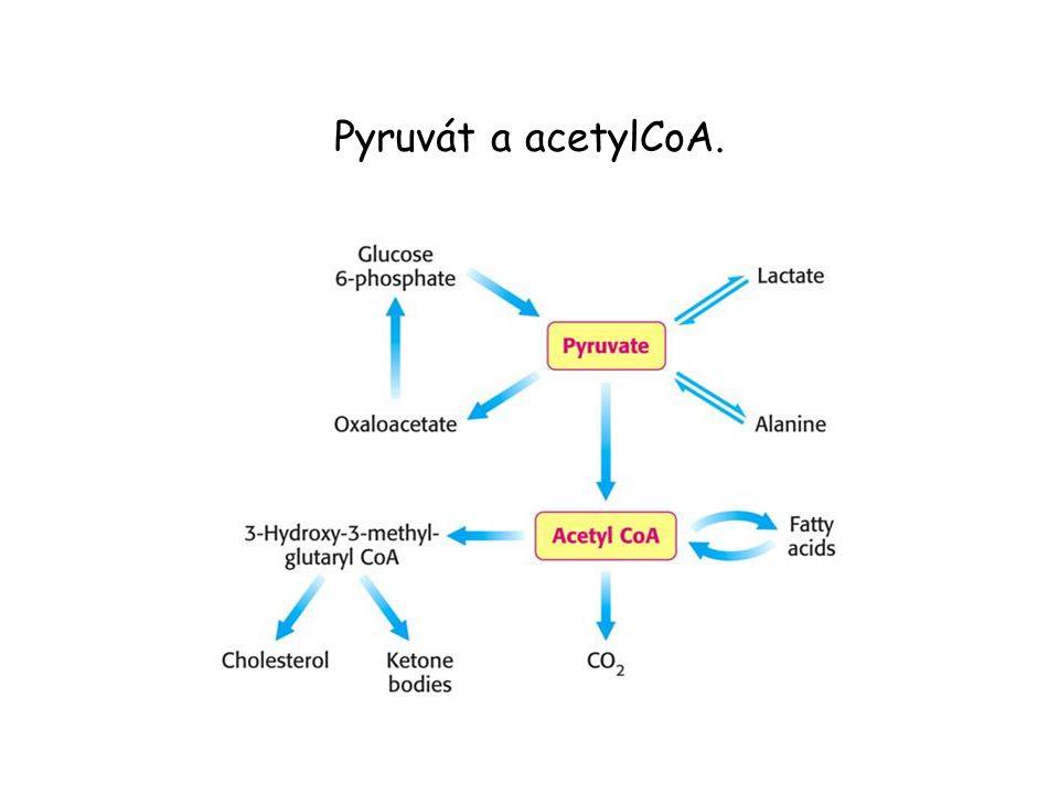 Pyruvát a acetylCoA.