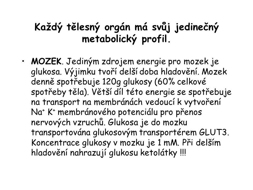 Každý tělesný orgán má svůj jedinečný metabolický profil. MOZEK. Jediným zdrojem energie pro mozek je glukosa. Výjimku tvoří delší doba hladovění. Moz